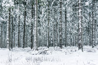 Thuringian winter forest