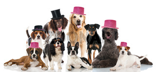 Partyhunde