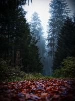 dark autumn forest