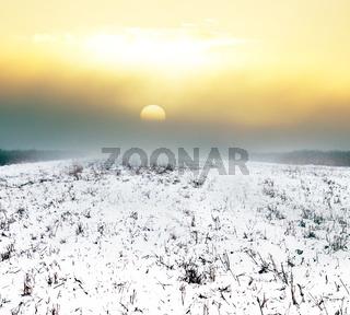 Fields of winter crops under snow