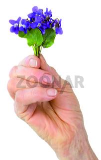 Violet Flower Cutout