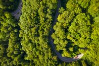 Aerial of driving cars through a green, curvy forest road, idyllic moment of an vacation trip as a top shot by a drone in summer.