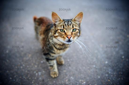 Glaring Cat