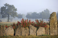 Breton garden with small menhirs