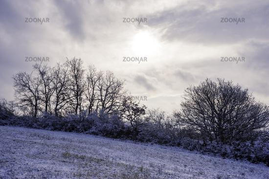 Landscape in winter in Burgenland