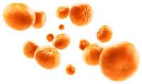 Orange tangerines levitate on a white background