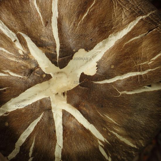 Detail of a mushroom hat