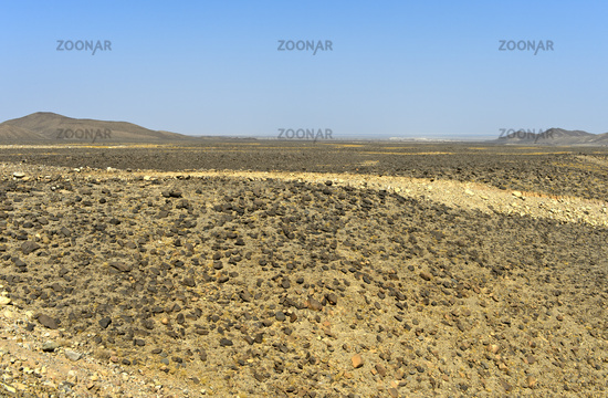 arid, stone-strewn plain of the Danakil Depression below sea level, Afar region, Ethiopia