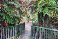 Park in Rotorua