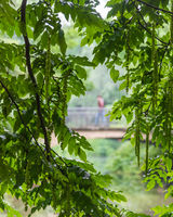 Man with a red jacket crosses a bridge behind leaves of a tree