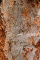 I heart trees