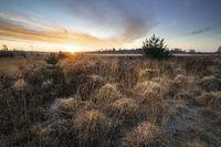 golden sunrise over marsh in spring