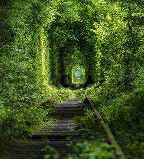 Tunnel of Love ( railway  in forest near Klevan, Ukraine)