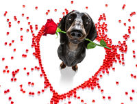 dog valentines love heart