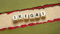 ikigai word abstract in wooden letter cubes