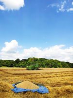 A modern combine harvester working on a wheat field, harvesting, agricultural land. The first batch of wheat lies on a tarp.