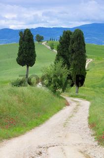 Toskana Zypressen mit Weg - Tuscany cypress trees with track 13