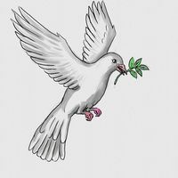 White Dove or Pigeon Carrying an Olive Leaf  Watercolor Painting