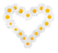 Many white daisies (Marguerite) formed into a heart, isolated on a white background.