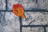 Red orange leaf on old fashioned stone sidewalk, Mexico