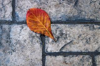 Red orange leaf on old fashioned stone sidewalk, Mexico
