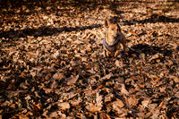 Two year old cute mixed breed dog in autumn or winter season. Pet and activity concept.