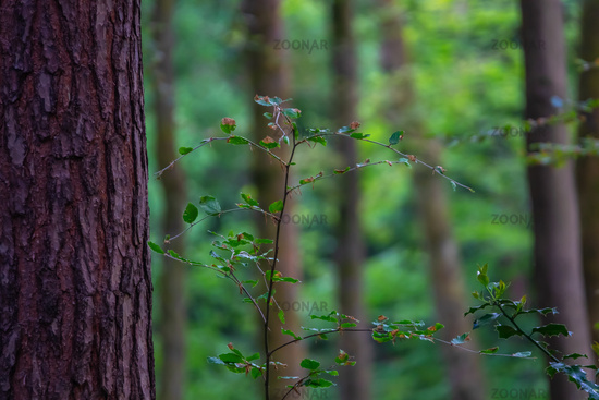 Peaceful Forest Background