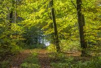 idyllic forest scenery at autumn time
