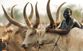 MUNDARI TRIBE, SOUTH SUDAN - MARCH 11, 2020: Man from Mundari Tribe throwing handful of ashes on back of Ankole Watusi cow while herding cattle in savanna in South Sudan, Africa