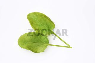 Sauerampfer, Rumex, acetosa