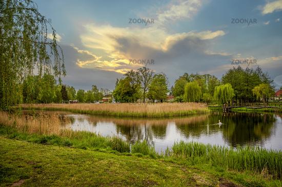 A white swan on the Radegast's mill pond