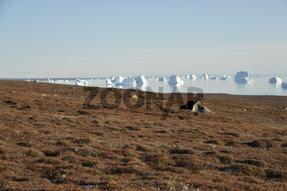 Landschaft und Eisberge am Sydkap, Scoresby Sund, Ost-Grönland, Scoresby Sund