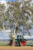 A moving tractor and a birch tree in storm