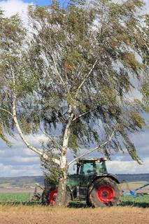 Fahrender Traktor und Birkenbaum im Sturm