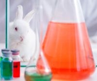 White rabbit in scientific lab experiment