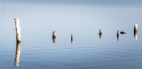 wooden posts in calm lake water in the afternoon autumn background