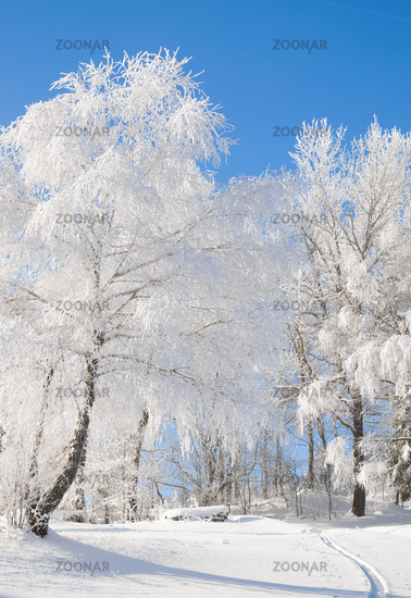 Hoarfrost on Trees,Bavarian Forest