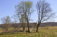 Tree group in the natural landscape of the Schopflocher Moor, Swabian Alb, Southern Germany, april