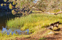 On the shore of Lake Catani - Mount Buffalo