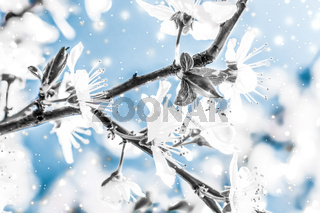 Christmas, New Years blue floral background, holiday card design, flower tree and snow glitter as winter season sale promotion backdrop for luxury beauty brand