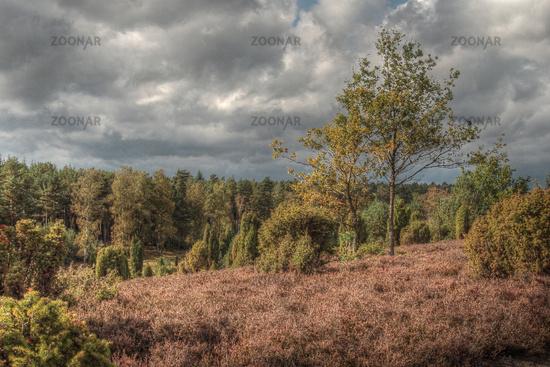 Heathland in autumn