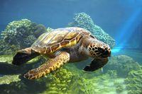 Tortoise 4.jpg
