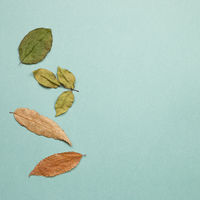 Autumn dry leaves on green background. flat lay, top view, copy space
