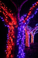 Red and blue fairy lights looping around a tree outside