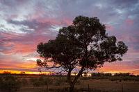 Outback sunrise landscape Australia