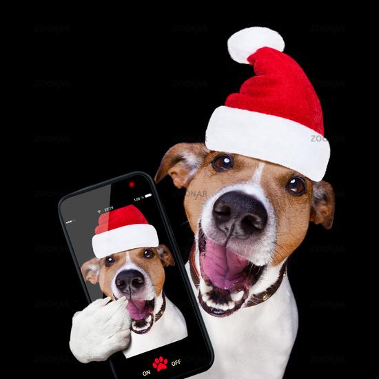 christmas santa claus dog isolated on black selfie