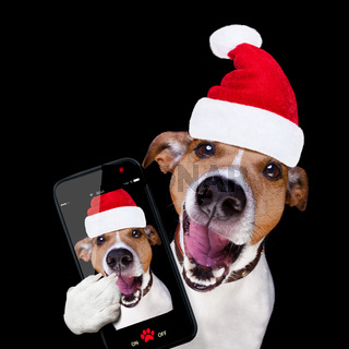 christmas santa claus dog isolated on black selfie