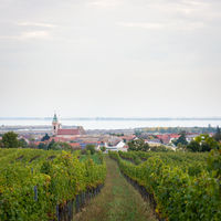 Village of Rust on Lake Neusiedlersee with vineyards