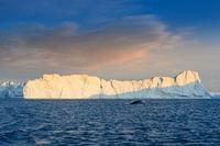 floating glaciers wit whale keporkak at polar night