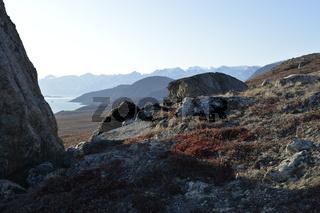 Pflanzen und Felsen im Herbst, Sydkap, Scoresby Sund, Ost-Grönland